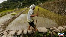 Pangilinan calls for release of P6B compensation for rice farmers this December