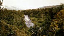 Forscher: Neuguinea ist Insel mit größter Pflanzenvielfalt