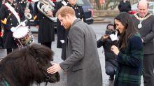 Prinz Harry wird von Shetland-Pony gebissen – und Twitter kriegt sich nicht mehr ein