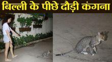 Kangana Ranaut plays with cat on Mumbai street; Watch video