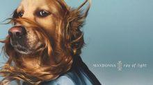 Cachorro faz sucesso recriando visuais icônicos de Madonna