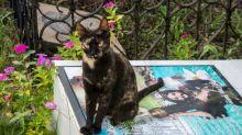 Los gatos cuidan las tumbas en el pueblo que inspiró a Gabo