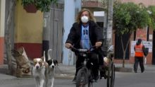 Stranded surfer says Argentina must repatriate dogs too