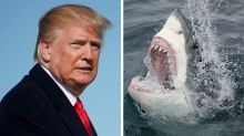 Trump Is Scared Of Sharks And 10 Other Things Stormy Daniels Revealed