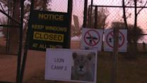 U.S. woman killed by lion mauling in South Africa