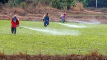 Thai rice exports hit by strong baht, unlikely to meet 2019 goal