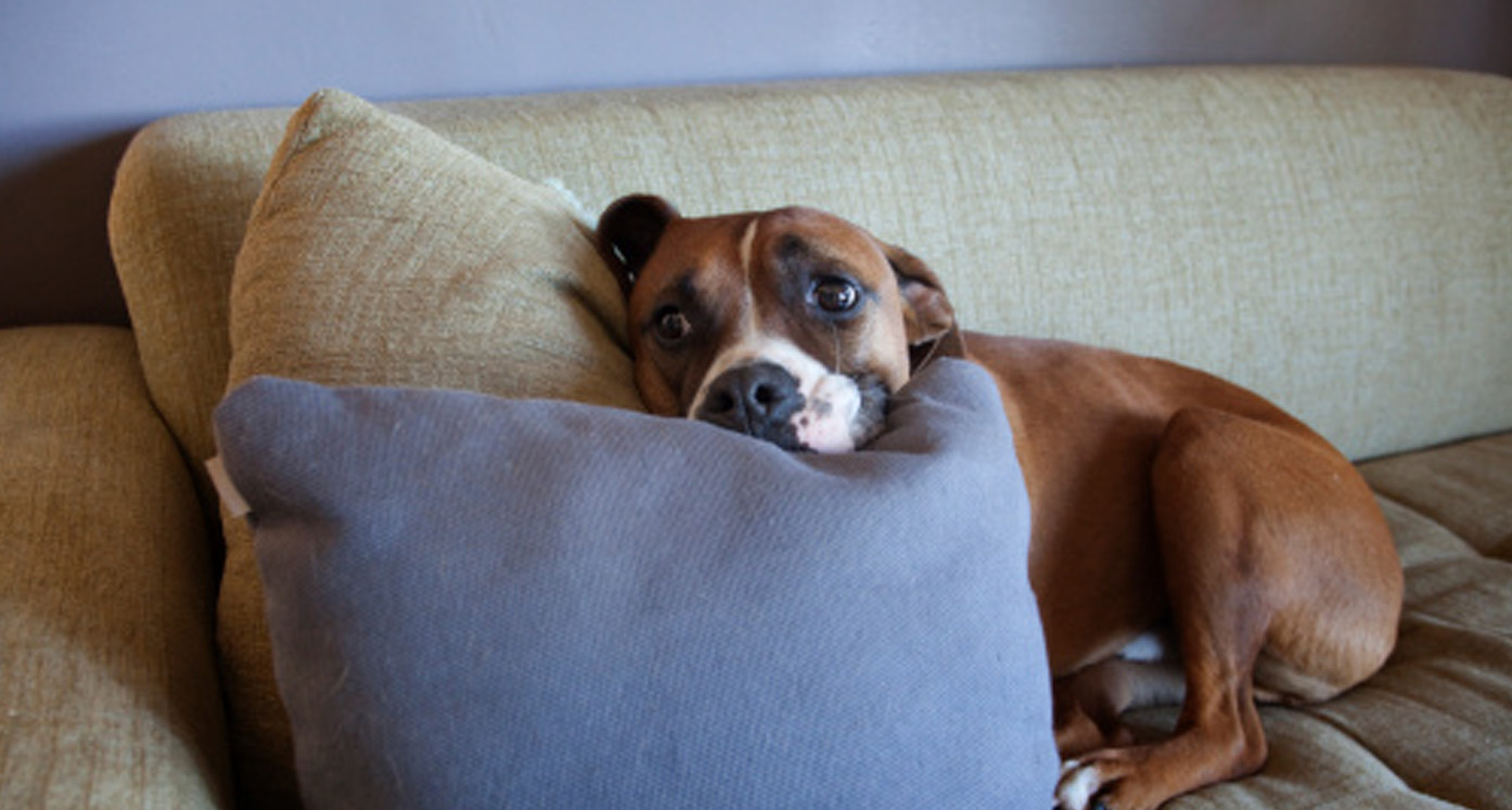 Surprising explanation behind some of your pet's strangest behaviours