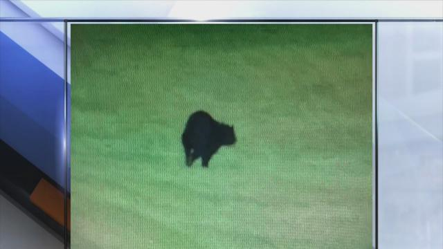 6pm: Black bear captured on Bath Township cruiser video, resident snaps pictures of bear on his patio