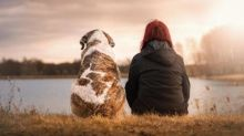 Cat and dog owners with coronavirus 'should stay away from their pets to avoid transmission'