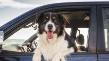 La solución fácil y práctica para que tu perro no ensucie tu auto