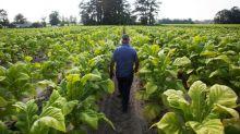 U.S. farmers scramble to harvest crops as hurricane looms
