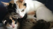 Six cats 'callously' sealed in a box and dumped in field