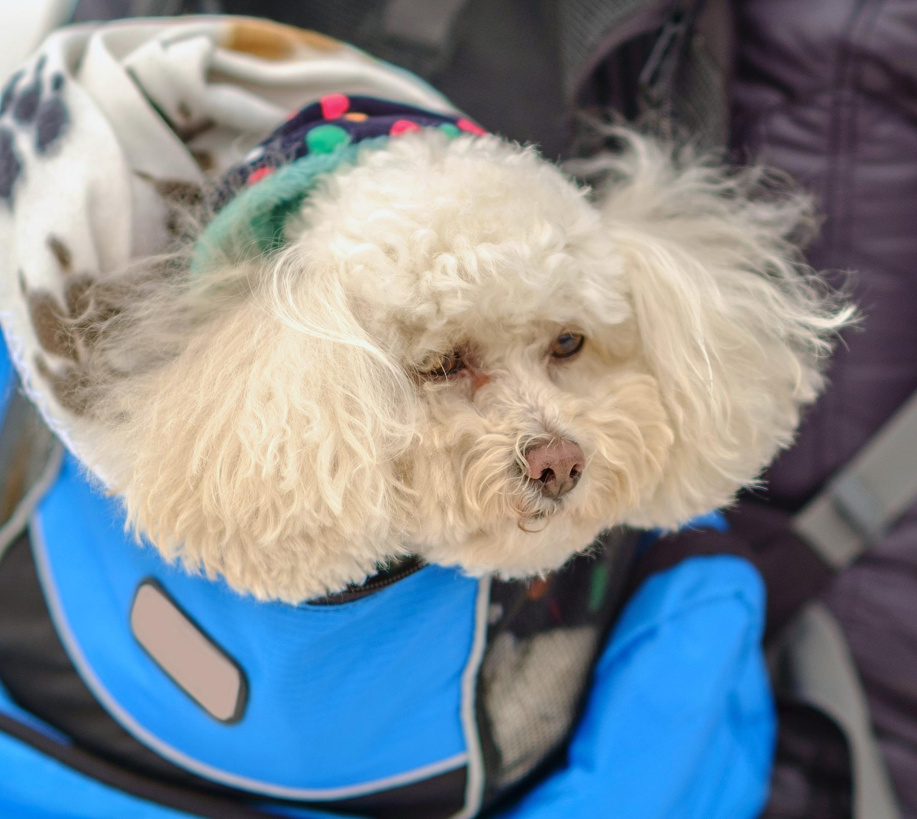 Pet Dogs Must Be In A Carrier To Ride The NYC Subway So Big - Nyc subway bans dogs unless fit bag new yorkers reacted