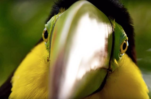 Nature documentary 'Planet Earth II' looks absolutely stunning