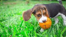 Bases para educar a un perro rápidamente