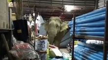 Durian-crazed elephant smashes his way into store, comes back for more