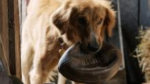 'A Dog's Purpose' Writer Says 'No Animals Were Harmed' in Making of Film