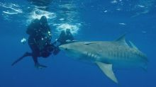 Shark Week Travels Far and Deep in 'African Shark Safari' and 'Lair of the Sawfish'