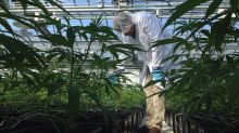 Ont. pot producer Aphria launches new brand ahead of legalization