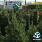 LA recycling company offering free Christmas trees for trash