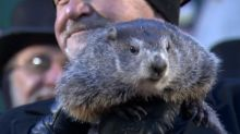 Which groundhog is right: Wiarton Willie or Shubenacadie Sam?