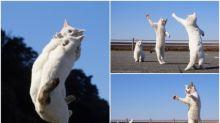 日本「白貓拳」圖集 埋身肉搏好刺激