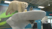Return to sender: passengers sent back after arriving at Yellowknife Airport