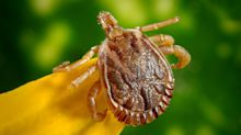 Lyme disease risk could be on the rise, but what is the condition?