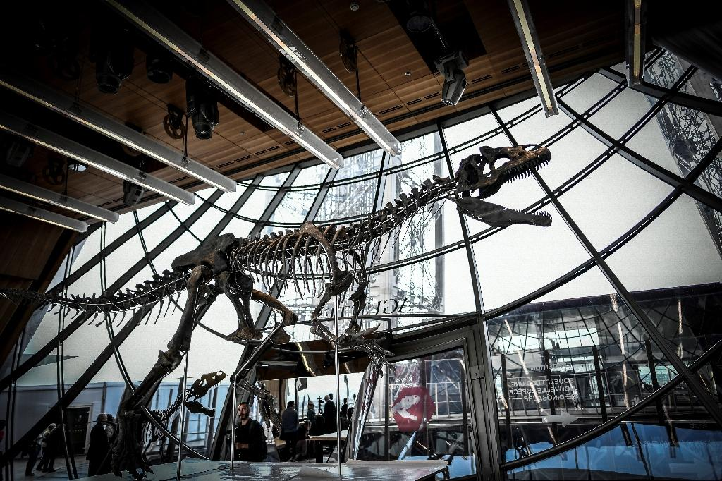 The 150-million-year-old skeleton, which is 70 percent intact, was snapped up by an unnamed French art collector, who promised that the specimen will be lent out to a museum