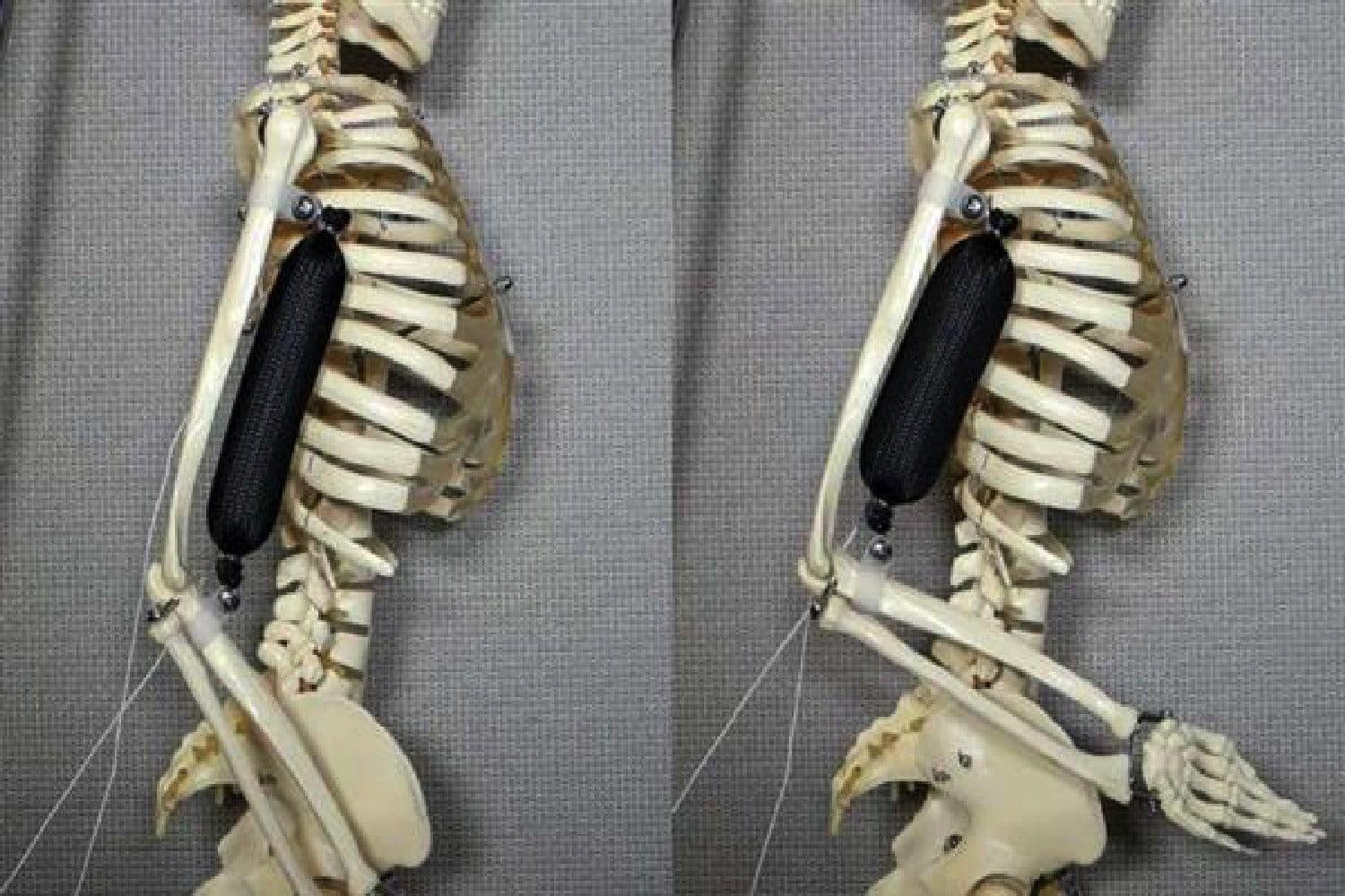 Newly developed artificial muscles can lift 1,000 times their own weight