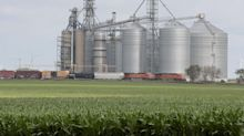 Wheat prices end at a 3-week high; corn falls from its highest since 2013