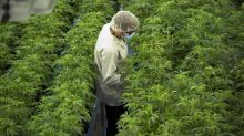 Cannabis venture capital firm Canopy Rivers reports $1.8-million Q4 loss