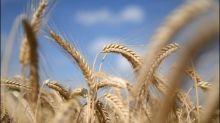 Bericht: Öko-Landwirtschaft wächst auf knapp zehn Prozent der Anbaufläche