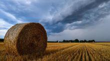 Der Bauernkrieg der Munich Re