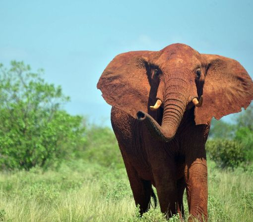Three-year African elephant census reveals dramatic decline