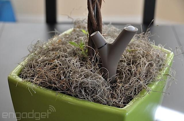 Parrot Flower Power review: Can technology give you a green thumb?