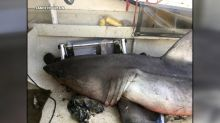 Great white shark jumps into 73-year-old fisherman's boat off coast of Australia