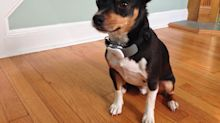 Start-up gives dogs' tags an upgrade