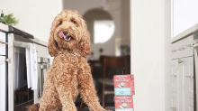 'They're magical': Stella & Chewy's vet-approved organic dog meal mixers are 30 percent off, today only
