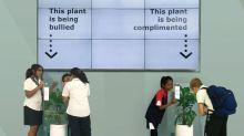 Plantas têm sentimentos? Loja faz o teste e resultado impressiona