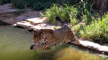 """La ausencia de visitas alivia a los """"huéspedes"""" de un gran zoo boliviano"""