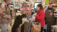Clever dog picks out his own treats at store and pays for them