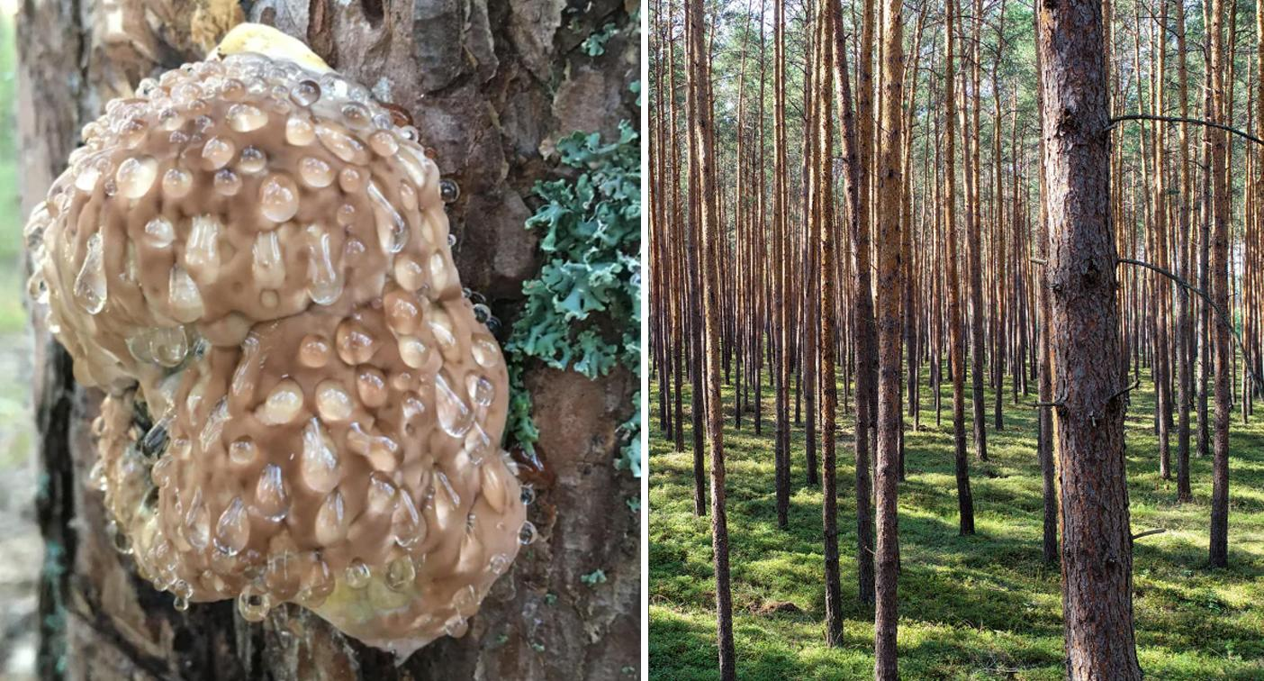 'Gives me chills': Mystery behind disturbing lump on tree solved