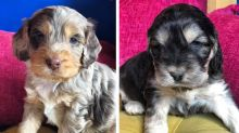 Two litters of puppies stolen from farm in 'act of appalling thievery'