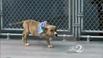 Blind puppy in need of home