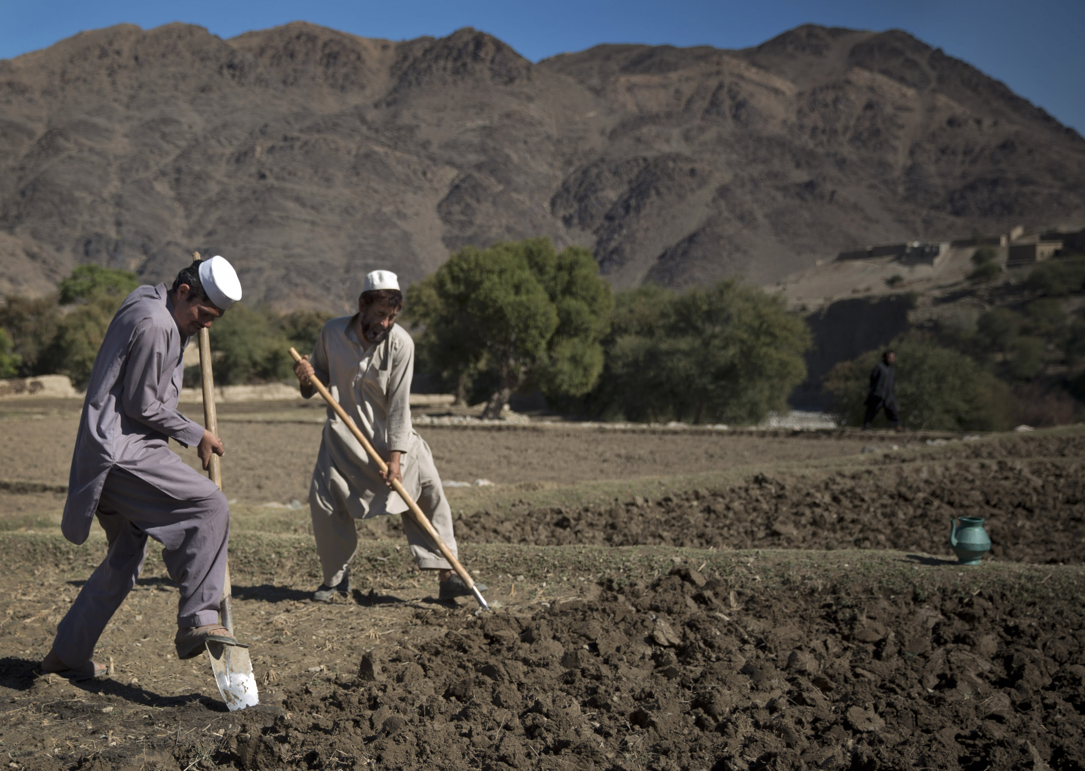 In this photo taken Tuesday, Nov. 12, 2013, Afghan poppy farmers prepare the soil for their poppy seeds in fields in Cham Kalai village in Afghanistan's eastern Nangarhar province, an area which is largely controlled by Taliban. Afghanistan's opium production surged in 2013 to record levels, despite 12 years of international efforts to wean the country off the narcotics trade, according to a report released Wednesday by the U.N.'s drug control agency. (AP Photo/Anja Niedringhaus)