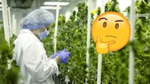 So you (still) want to invest in cannabis? What you should know with legalization almost here