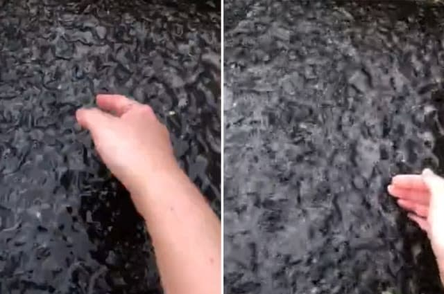 Vibrating water in Florida drainage ditch turns out to be thousands of tadpoles