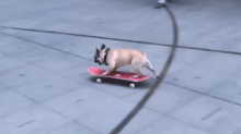Skateboarding dog crashes into BBC building