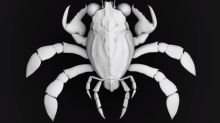 Newly-discovered ancient crab species is like nothing science has seen before